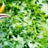 Hornbill_Web
